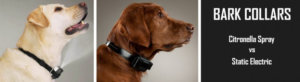 Is the Citronella Dog Collar a Safer Alternative to Electric Shock?