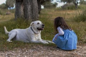 How to Create the Perfect Outdoor Space for Kids and Dogs