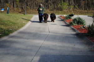 5 Ridiculously Silly Things That People Say To Me When I Am Walking the Dogs