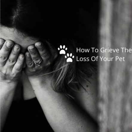 Losing A Pet-What To Expect