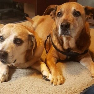 Palliative Care For Our Pets