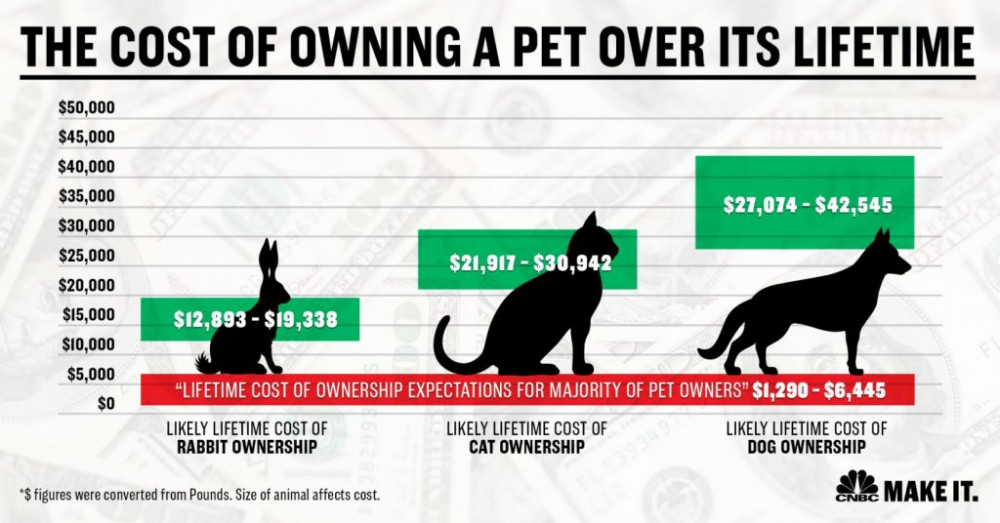 The cost of owning a dog is 42k and up the. Cost for a cat is 30 k and up. CNBC Make it poster