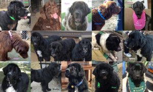 Commercial Mills Cost Newfs Their Lives. 29 Saved, 15 To Go. Help