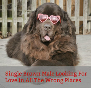 Single Brown Male Dog Looking For Love In All The Wrong Places.