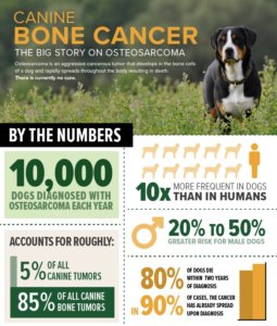 Canine Bone Cancer: The Big Story on Osteosarcoma In Dogs