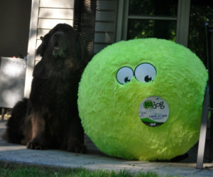 My Obsession With Dog Toys Continues On A Bigger Scale