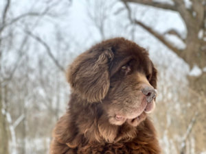 4 Ways To Manage Your Dog's Dry Skin In Winter