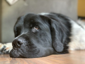 A Letter To My Dog's First Owner