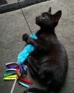 Taking Your Rescue Kitten Home: What to Expect