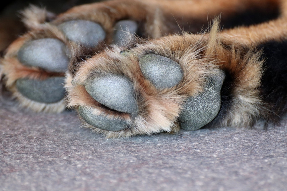 How To Heal Dogs Dry Paws