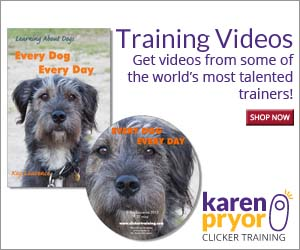 Improve your skills with KPCT's interactive training videos from some of the world's most talented trainers.