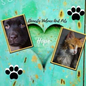 Free Domestic Violence Resources For You and Your Pet