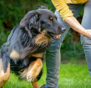 Urgent Three Commands That Can Save Your Dogs Life