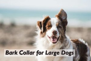How Bark Collars Are Good For Large Dogs?