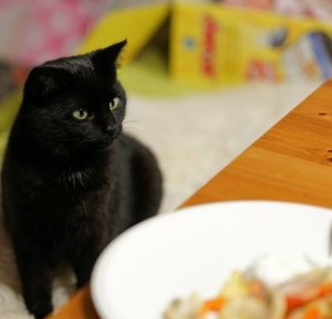 What Human Food Can Cats Eat