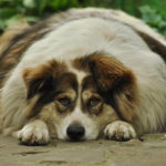 How To Help Your Dog Lose Weight