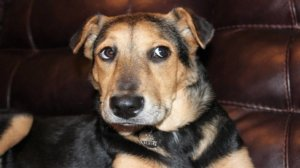 Adopt Don't Shop: Preparing for Your New Rescue Dog