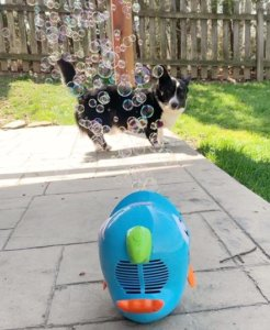 How To Make Dog Safe Bubbles: The 3 Best Homemade Dog Bubble Recipes!