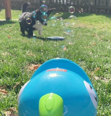 dog playing with bubble machine
