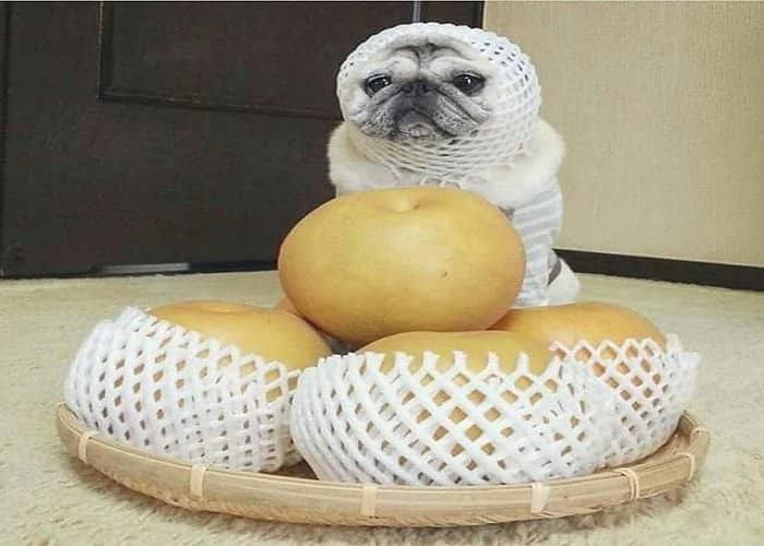 Can Dogs Eat Korean Pears? Is Korean Pears Safe For Dogs